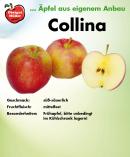 collina-schild