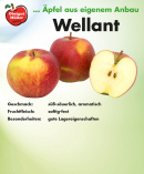 wellant-schild