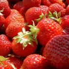 erdbeeren01