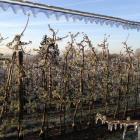 frostschutz_apfelplantage